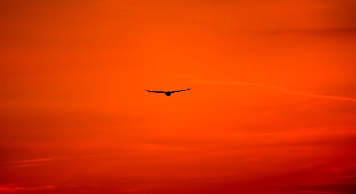 An eagle soaring in a red sunset sky