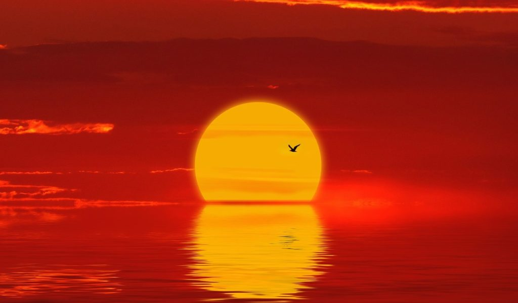 Bigg yellow sun dropping into an organ see. A gull is flying in front of the sun.