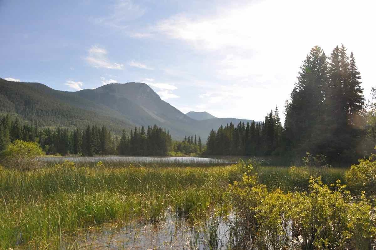 A view across a marsh surrounded by aspens and large spruce tree, looking up the rounded ridge and rock face of Mt Baldy, on the edge of the Rockies, in the Bow Valley, Alberta. The sky is pale blue, with white wisps of cloud encroaching from the right of the framework.