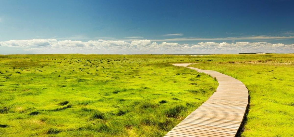 A wooden walkway winds through tufted grasslands toward a distant hlll or mesa. Puffy white clouds sit just above the horizon, with blue sky avbove them