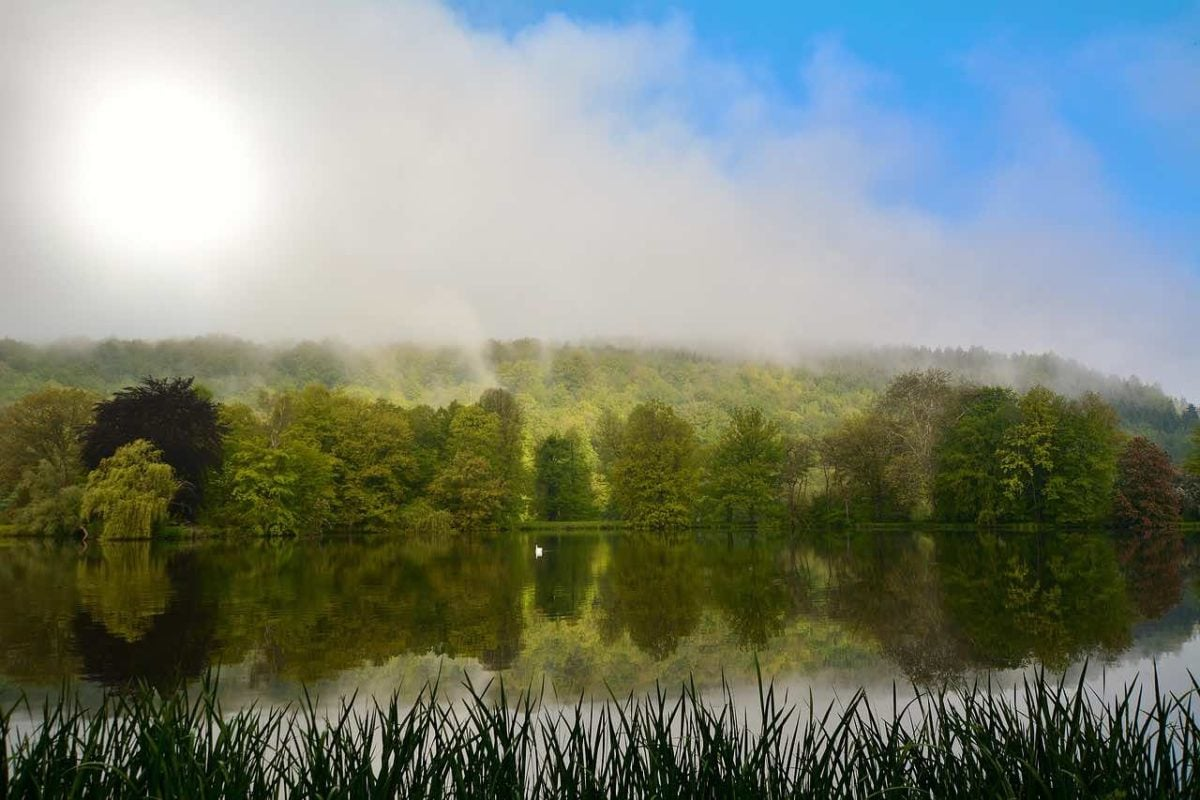 Sun is just beginning to hit a wooded hillside above a lake. In front of the water, marsh grasses are silhouetted. Mist rises off the deciduous forests, forming wispy clouds, in which the round bright shape of the sun is trying to peek through.