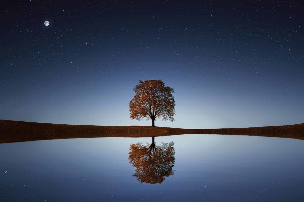 Peaceful view of single, leafy tree against the evening sky, and reflected in water below. Tiny moon in upper left corner of frame.